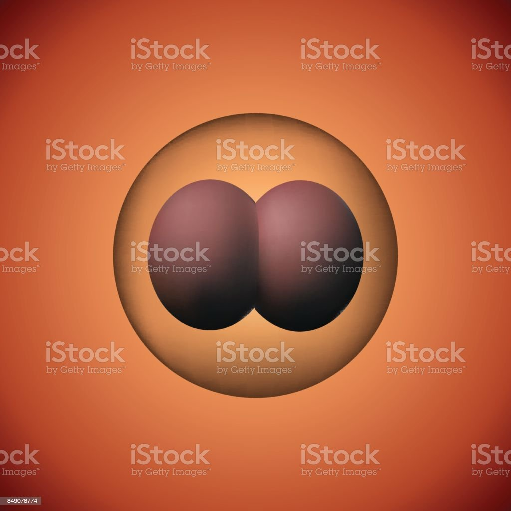 Two zygote. 3D image of experimental insemination. vector art illustration