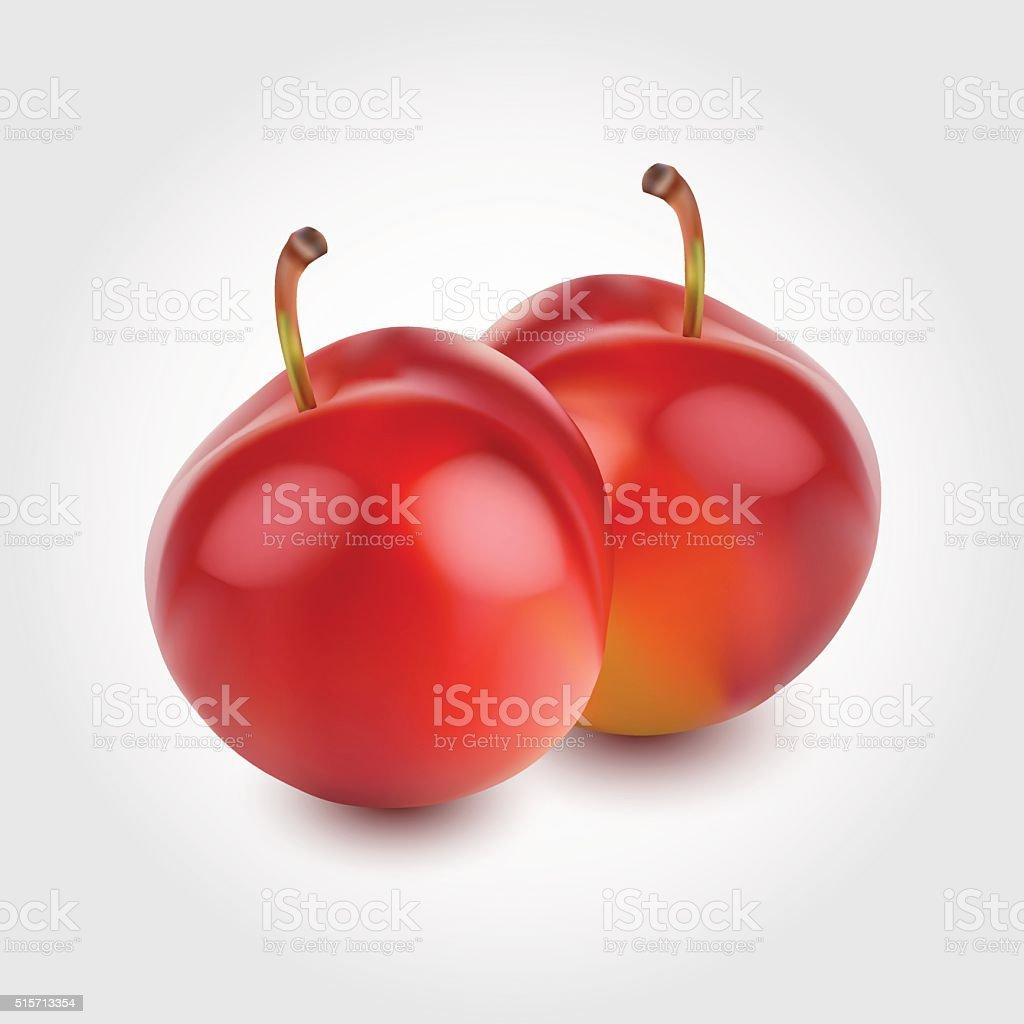 two-fresh-plum-fruits-illustration vector art illustration