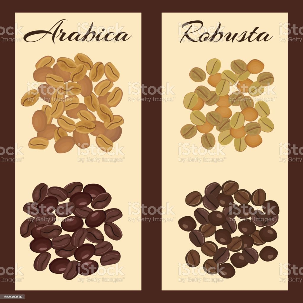 Types of coffee beans. vector art illustration