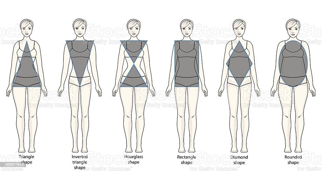 Types of female figures vector art illustration