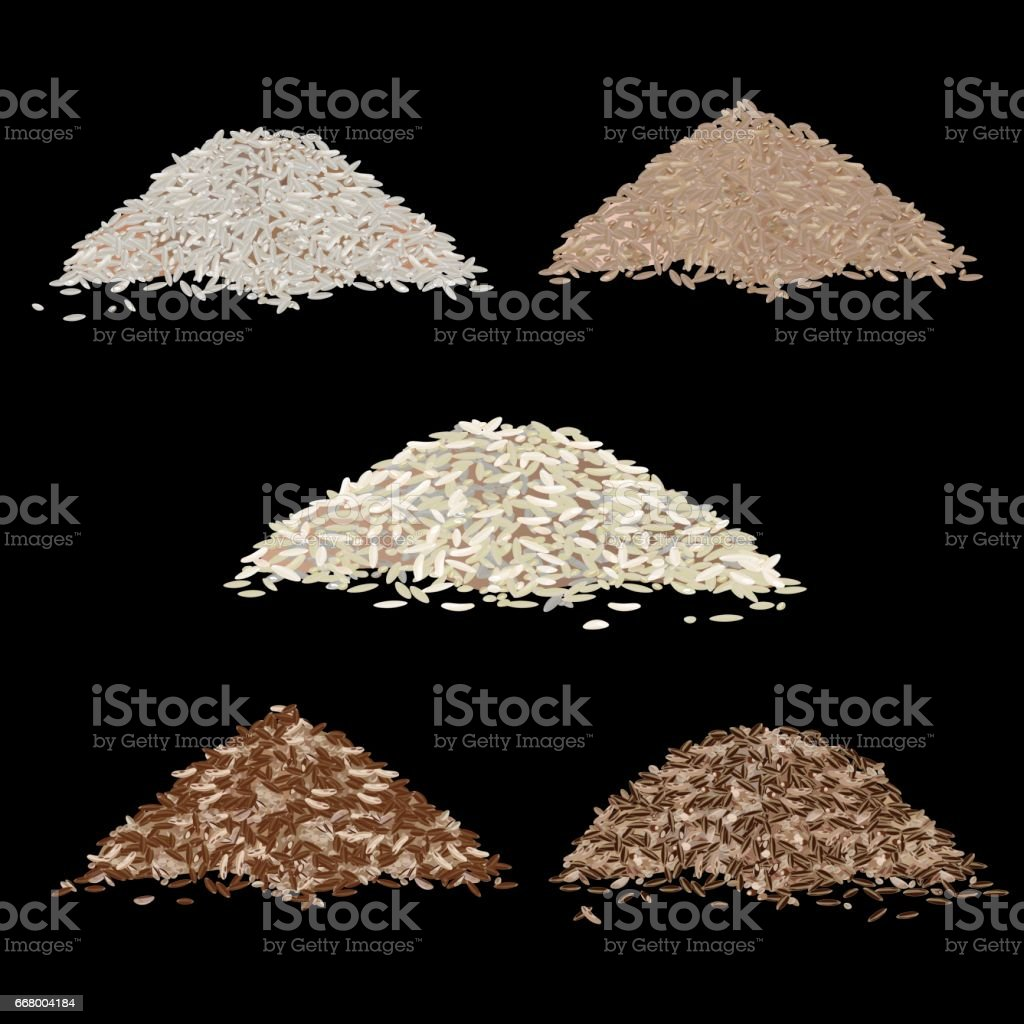 Types of rice grains vector art illustration