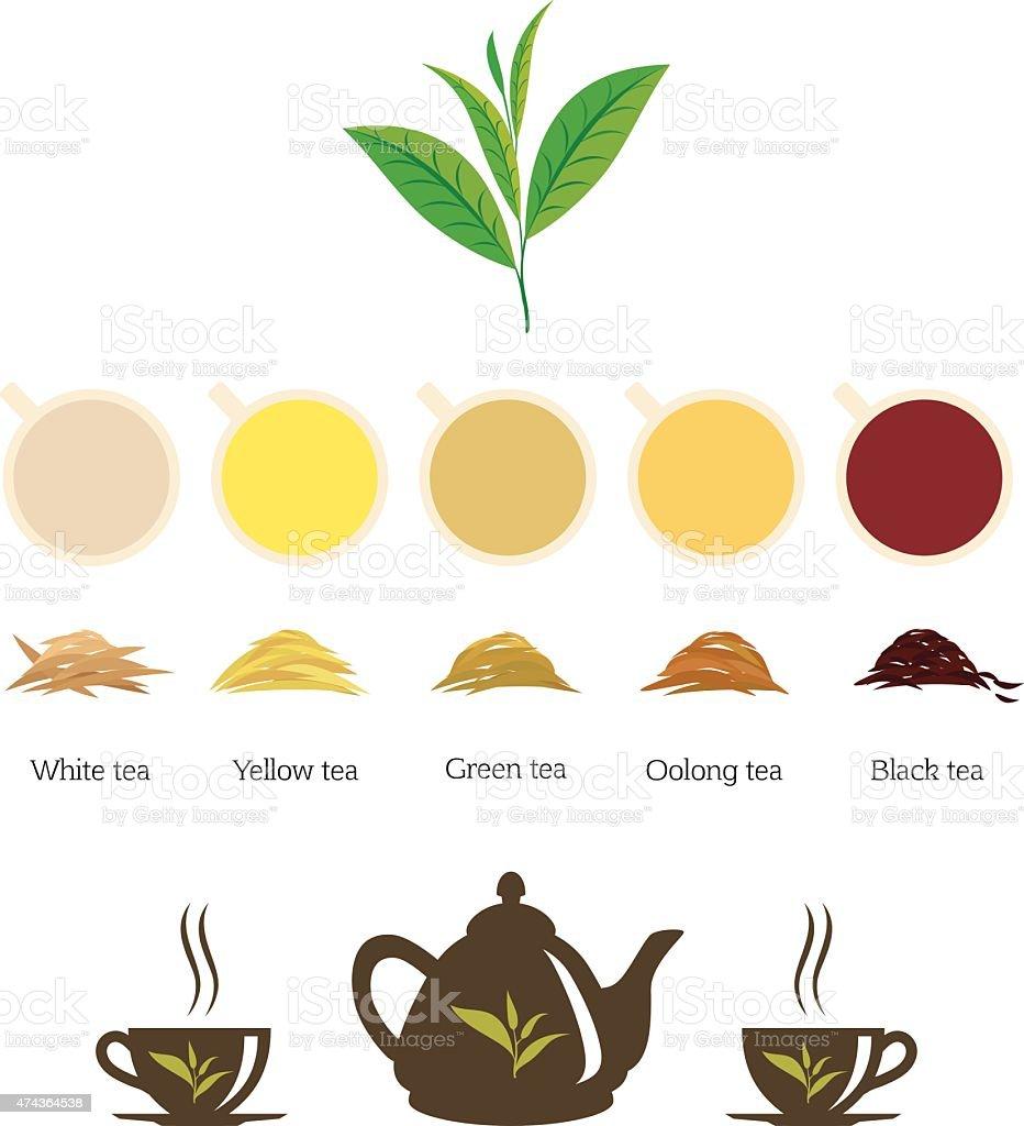 Types of Tea vector art illustration