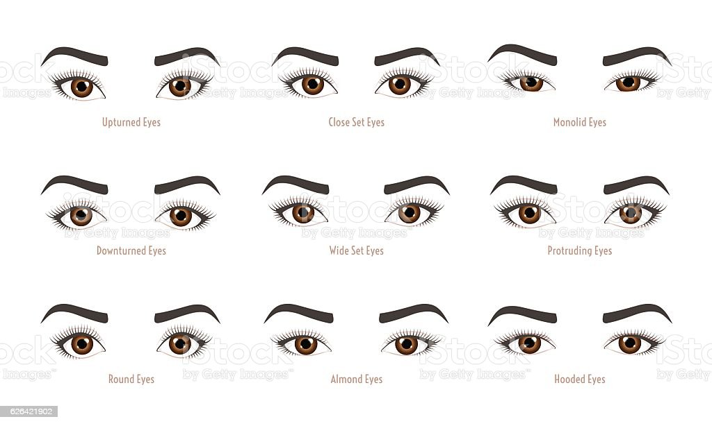 Types of woman eyes collection. Set of vector eye shapes. vector art illustration