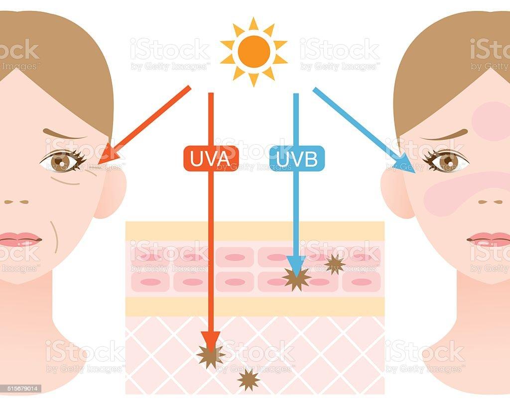 ultraviolet rays vector art illustration