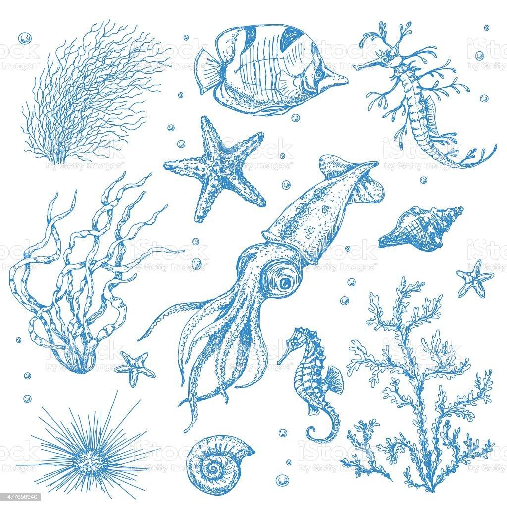 Underwater Plants and Animals Set vector art illustration