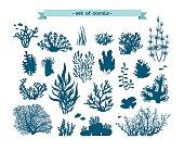 Underwater set of corals and algaes.
