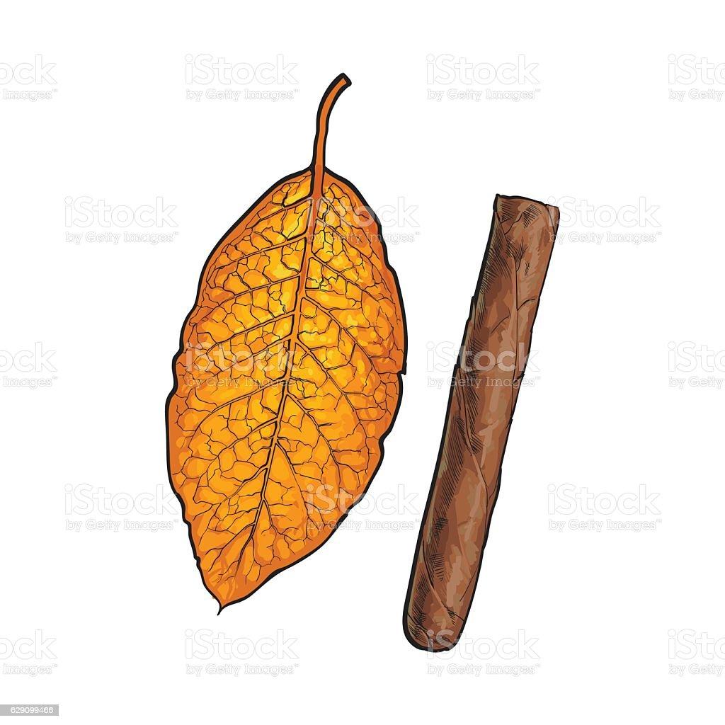Unlabelled unlit brown Caribbean, Cuban cigar, sketch vector illustration vector art illustration