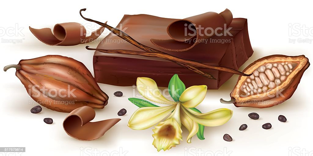 Vanilla chocolate and cocoa fruit vector art illustration