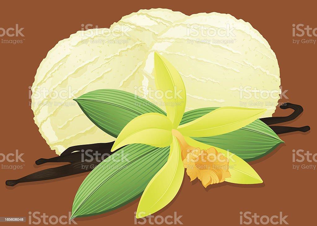 Vanilla Ice Cream royalty-free stock vector art