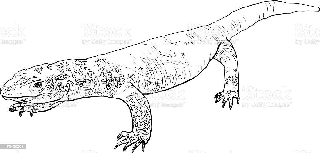 Varanus exanthematicus royalty-free stock vector art