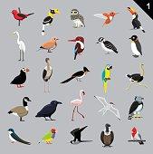 Various Birds Cartoon Vector Illustration 1