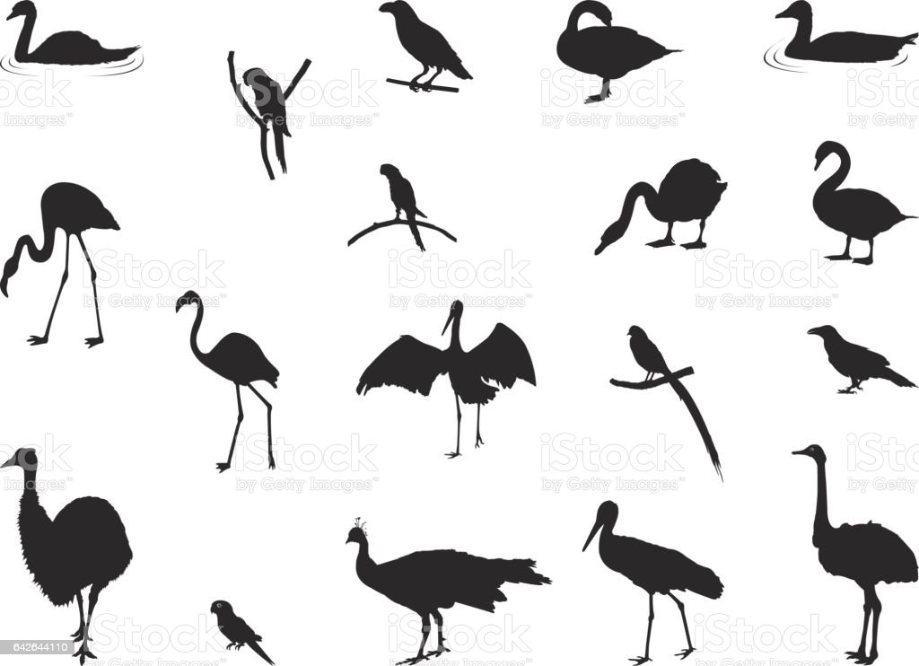 Various birds silhouette vector art illustration