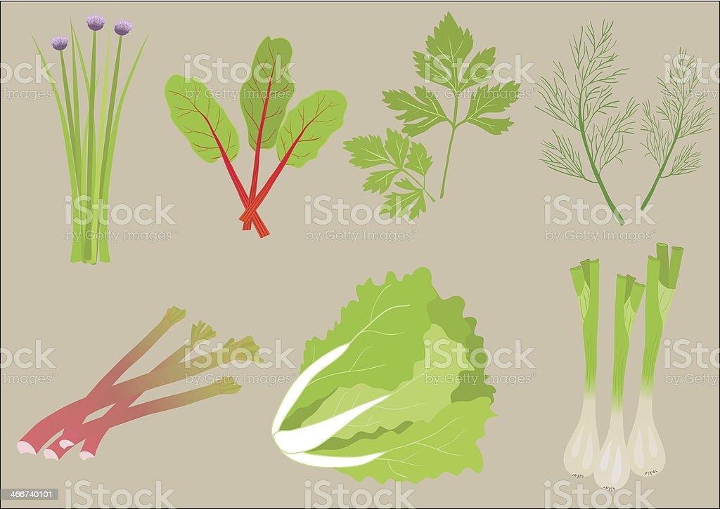 Various fresh greens on gray background  vector art illustration