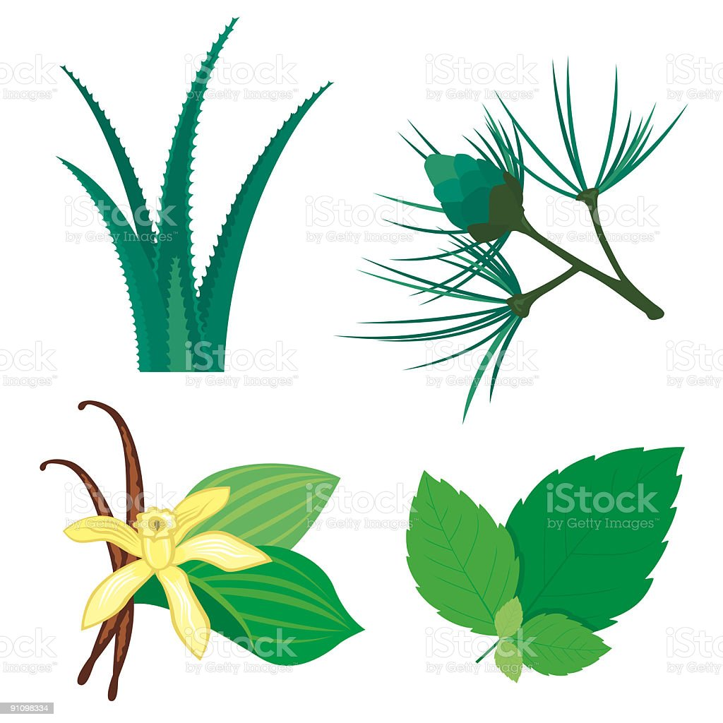 Various illustrated plant ingredients royalty-free stock vector art