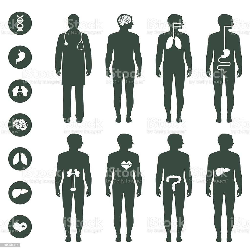 Various illustrations of human body anatomy vector art illustration