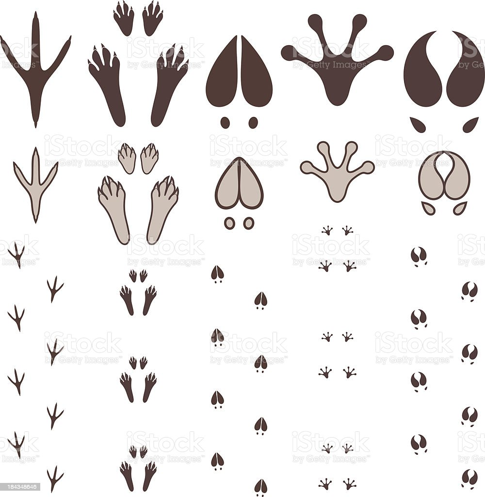 Various paw and footprints of animals royalty-free stock vector art