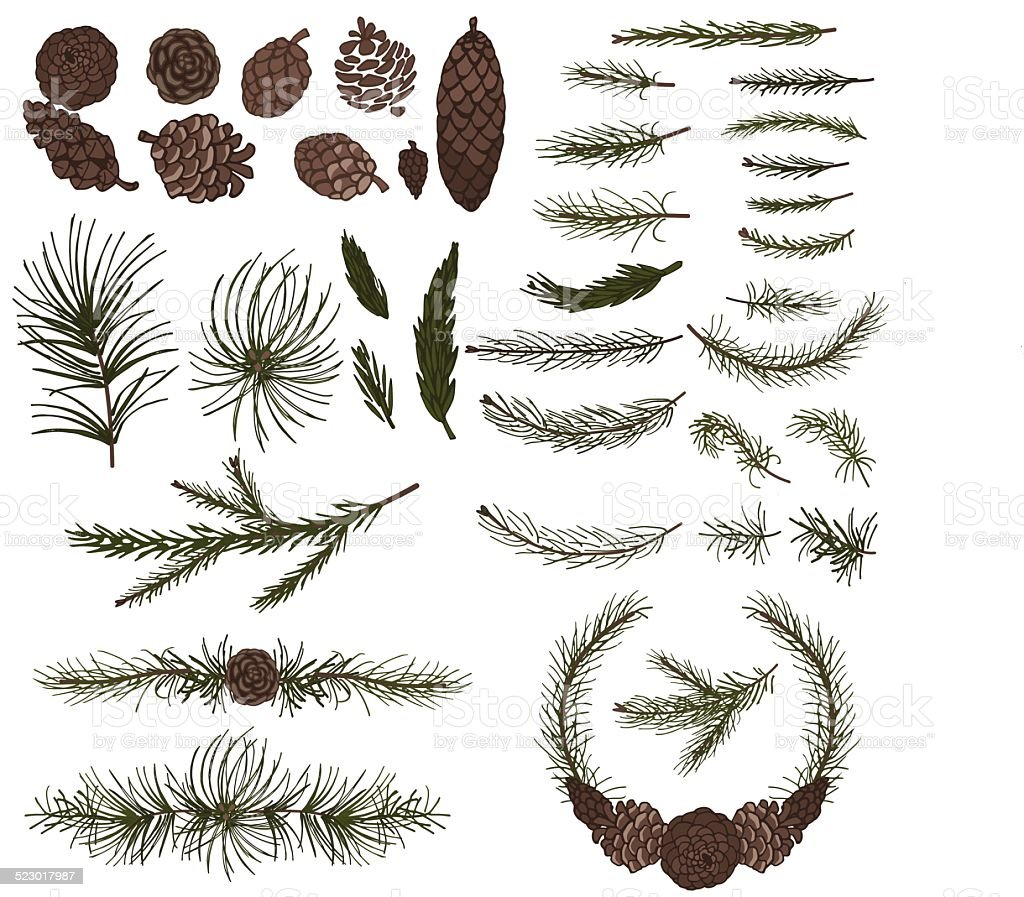 Various pine,spruce branches ,cones vector art illustration