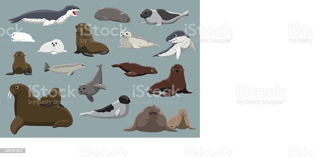 Various Seals Set Cartoon Vector Illustration vector art illustration