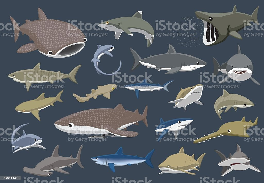 Various Sharks Set Cartoon Vector Illustration vector art illustration