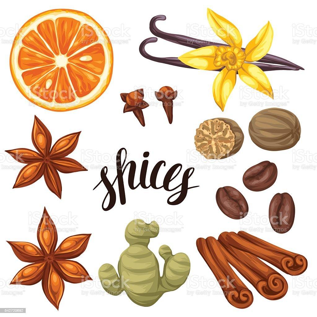 Various stylized spices set. Illustration of anise, cloves, vanilla, ginger vector art illustration