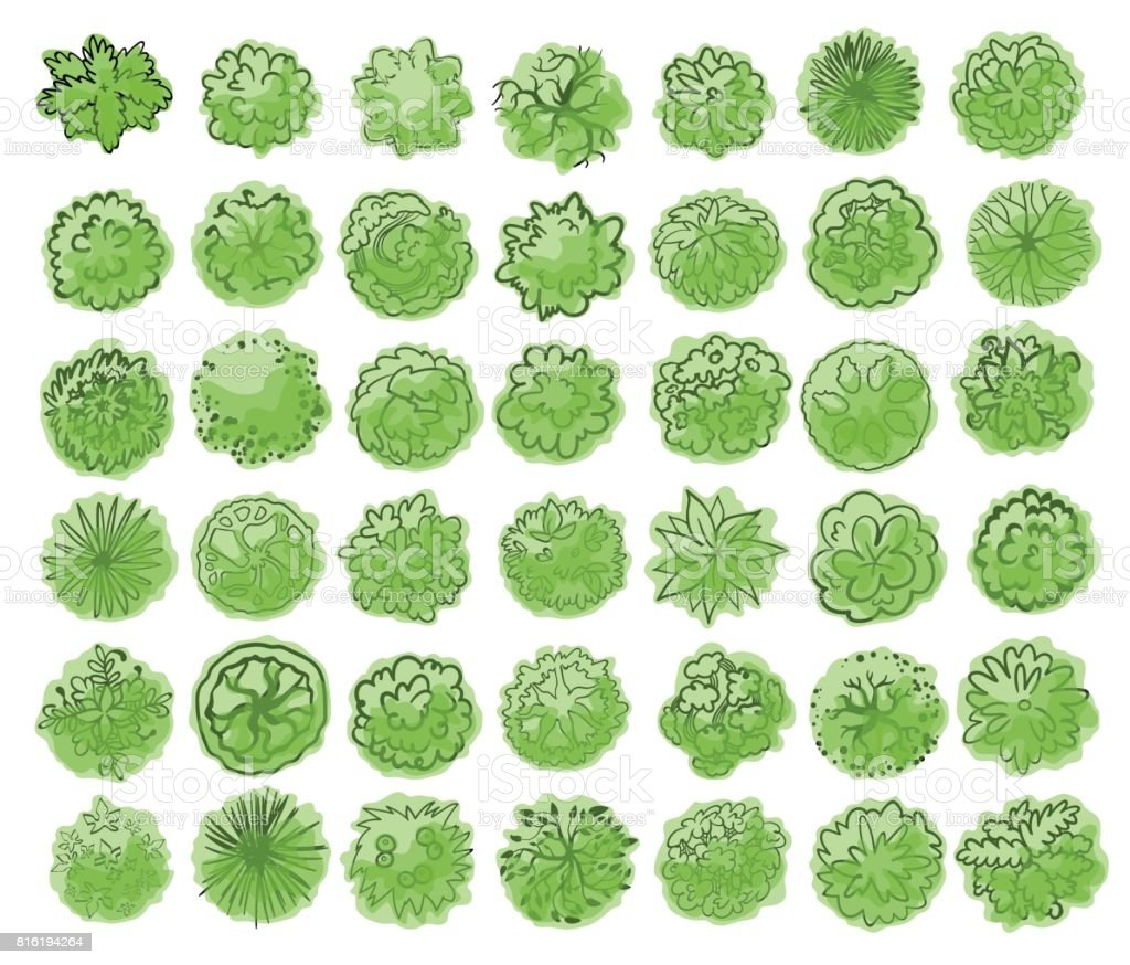 Various trees, bushes and shrubs, top view for landscape design plan. Vector illustration, isolated on white background. vector art illustration