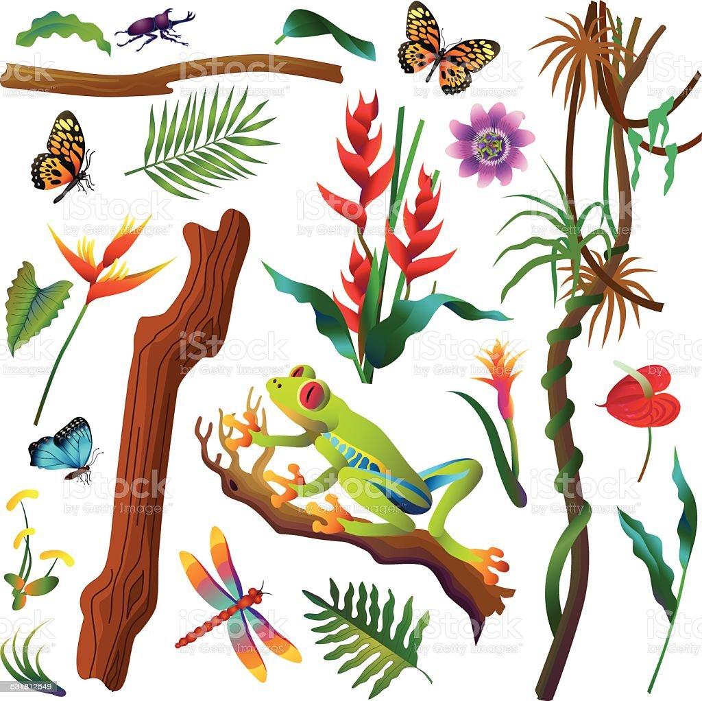 various tropical Amazon rainforest plants and animals vector art illustration