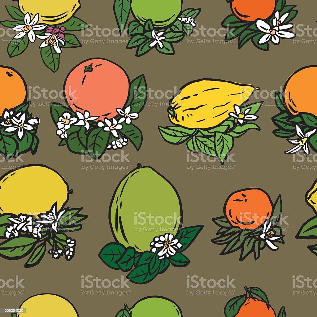 Various tropical citrus fruits vector art illustration