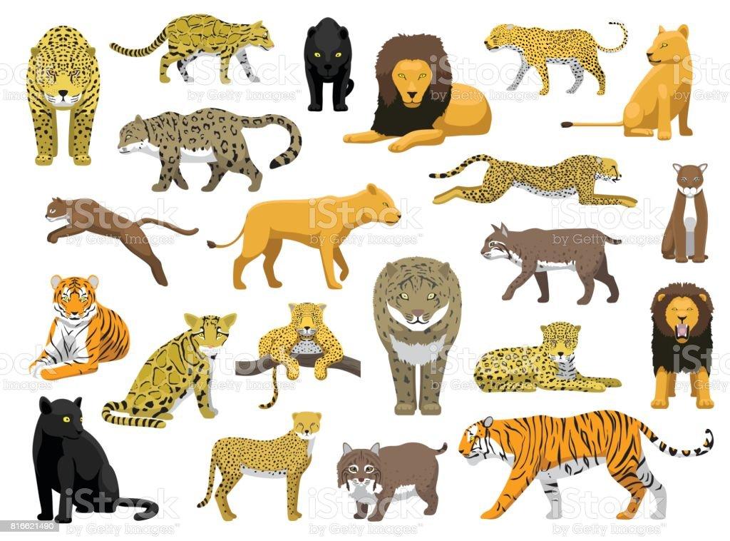 Various Wild Cat Panthera Vector Illustration vector art illustration