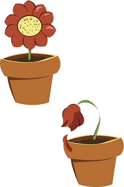 Wilted Plant Clip Art Vector Images Illustrations Istock