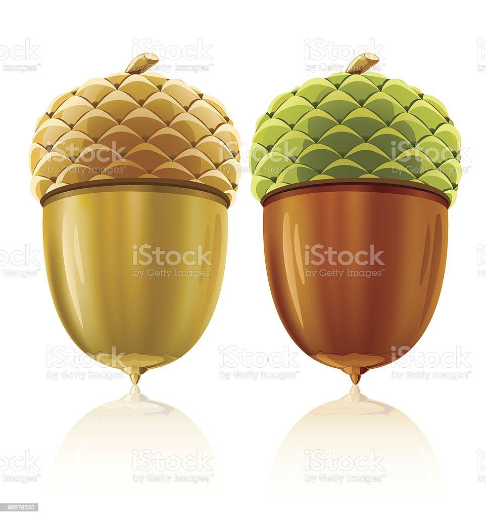 vector acorn nuts vector art illustration