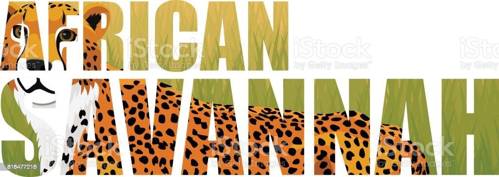 vector african cheetah hepard (Acinonyx jubatus) illustration vector art illustration