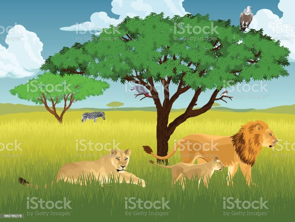 vector african savannah with lions, vulture and zebra vector art illustration