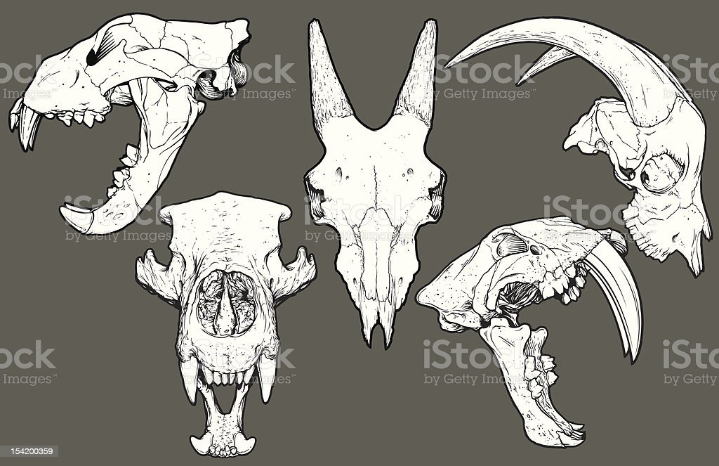 Vector Animal Skull Pack: Lion, Goat, Bear, Saber Tooth vector art illustration