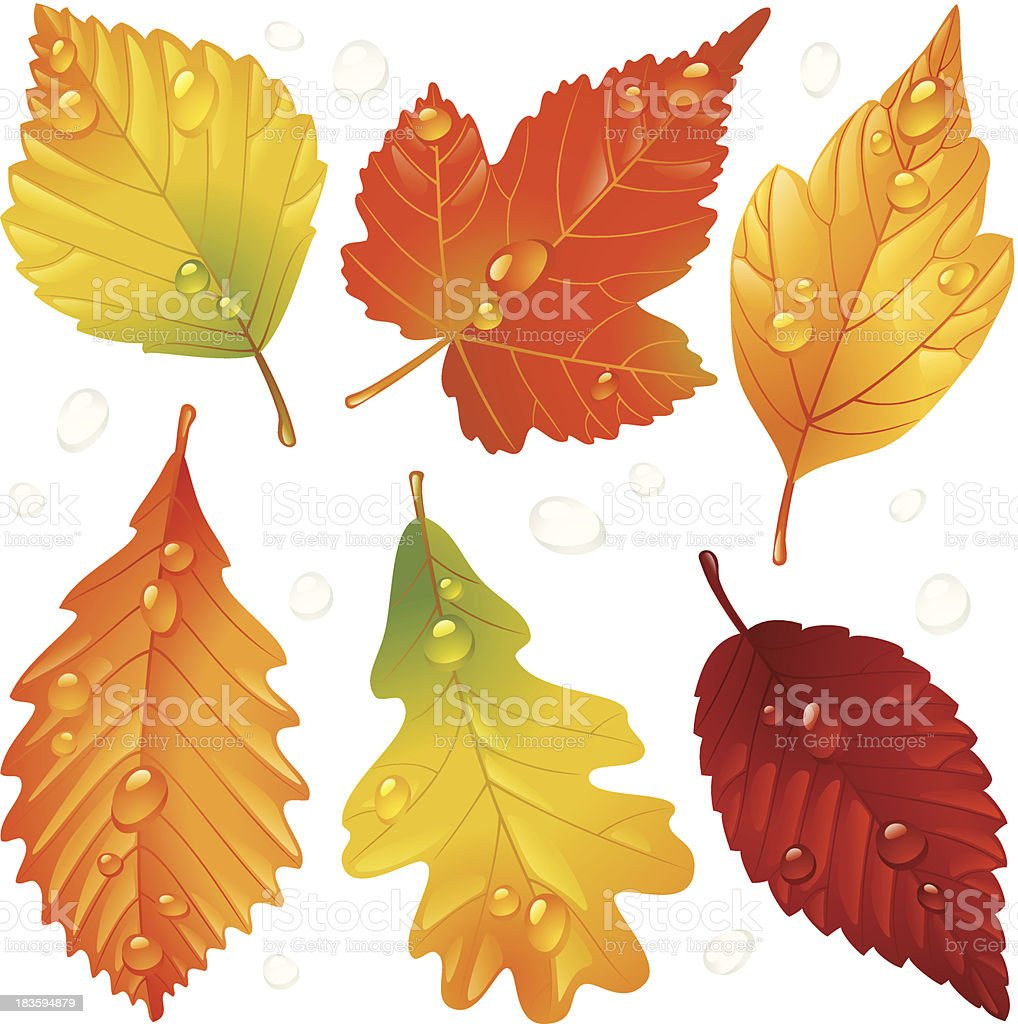 Vector autumn leaf set isolated on white background royalty-free stock vector art
