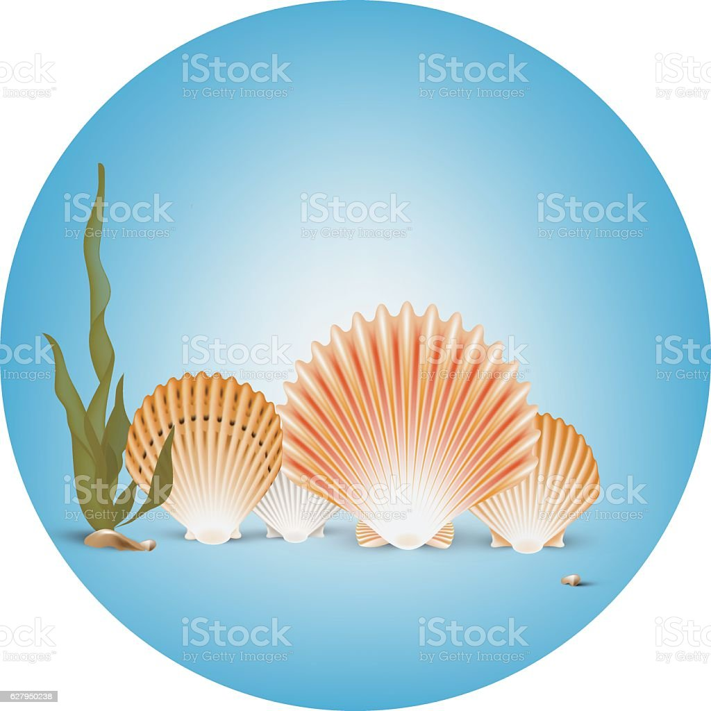 Vector background of sea floor with some seashells and kelp vector art illustration