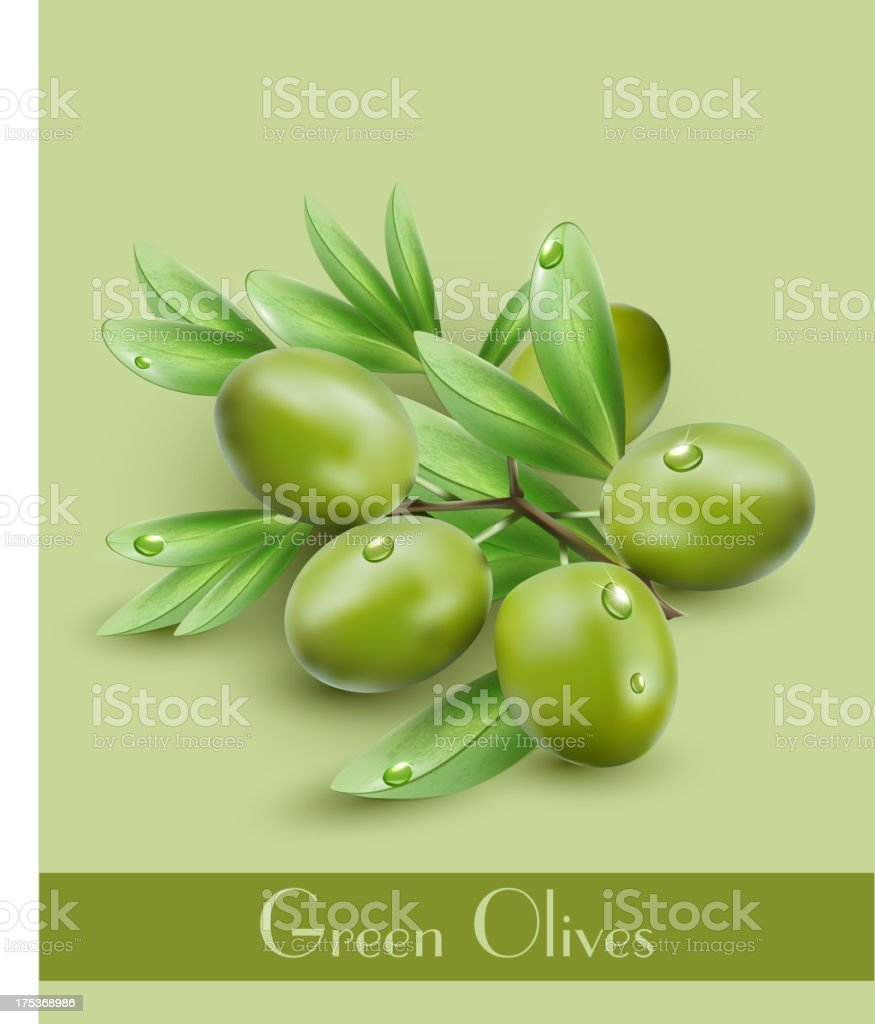 vector background with green olives royalty-free stock vector art