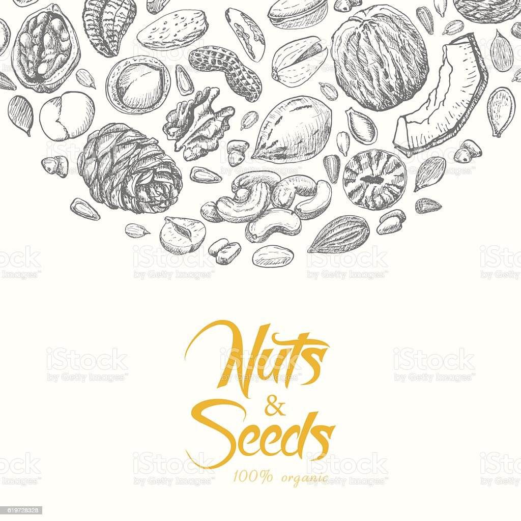 Vector background with nuts and seeds vector art illustration