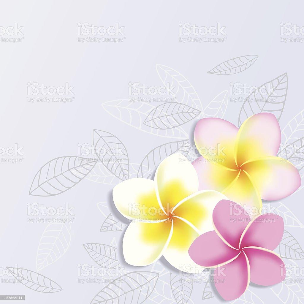 Vector Background with Plumeria Flowers vector art illustration