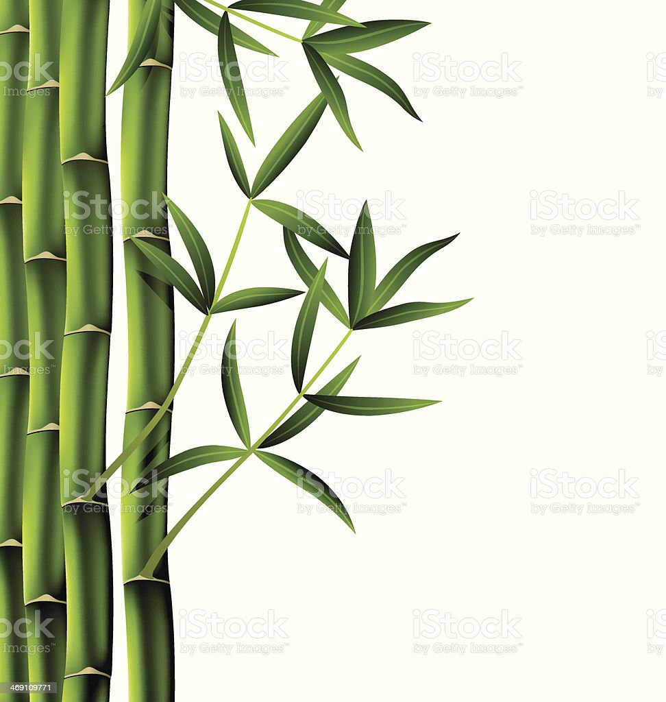 vector bamboo branches vector art illustration