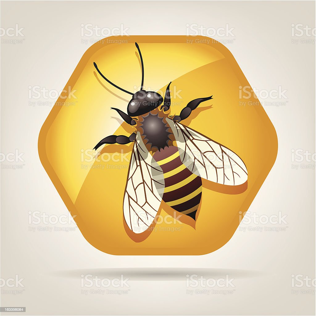 vector bee on honeycell royalty-free stock vector art