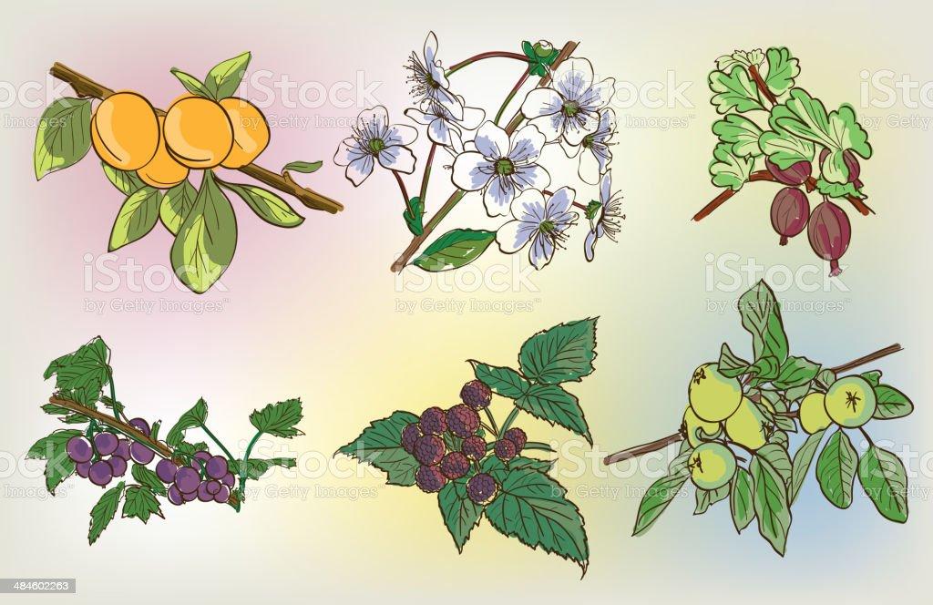 vector berry harvest set royalty-free stock vector art