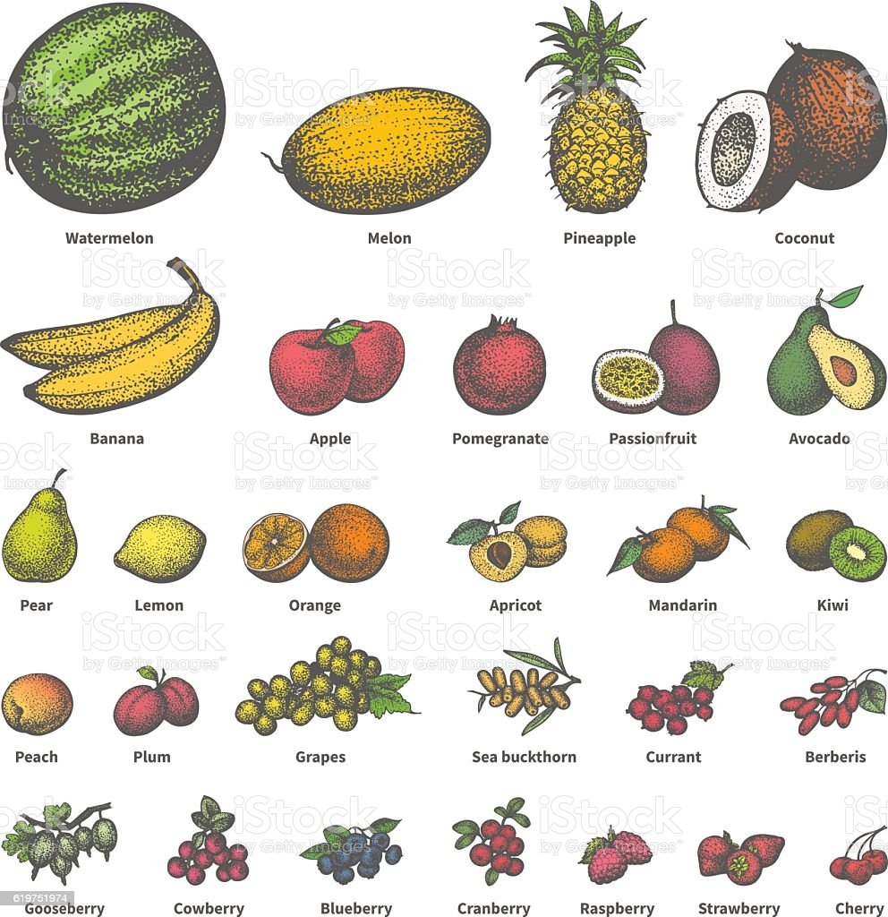 Vector big set different colored juicy ripe fruit vector art illustration