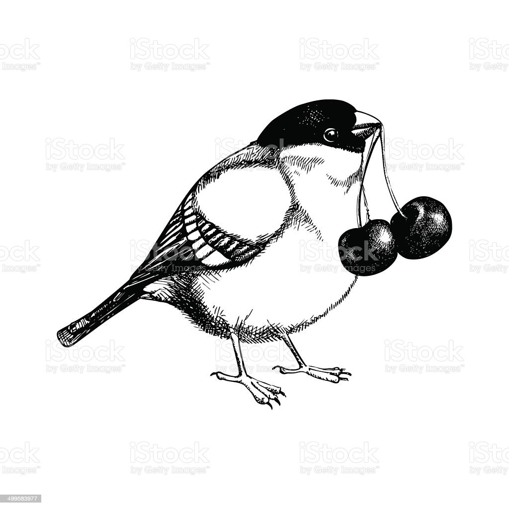 Vector bird  illustration isolated on white royalty-free stock vector art