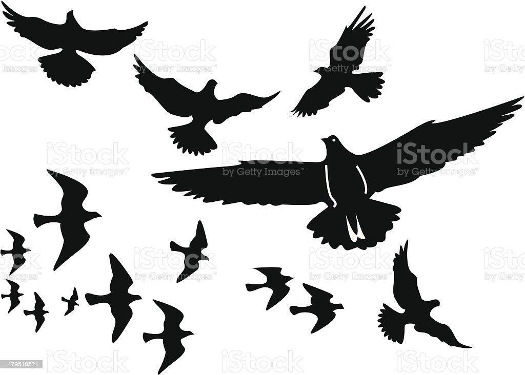 Vector birds silhouettes vector art illustration