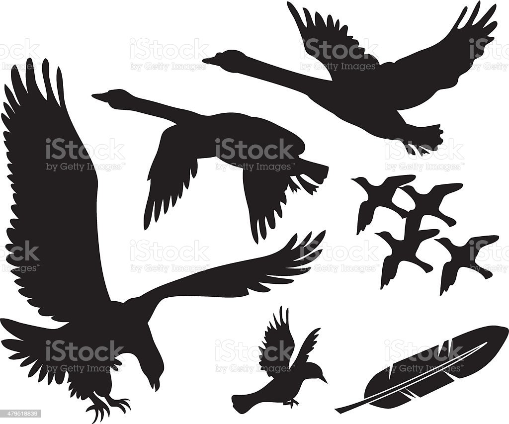 Vector birds - swans, eagle and others vector art illustration