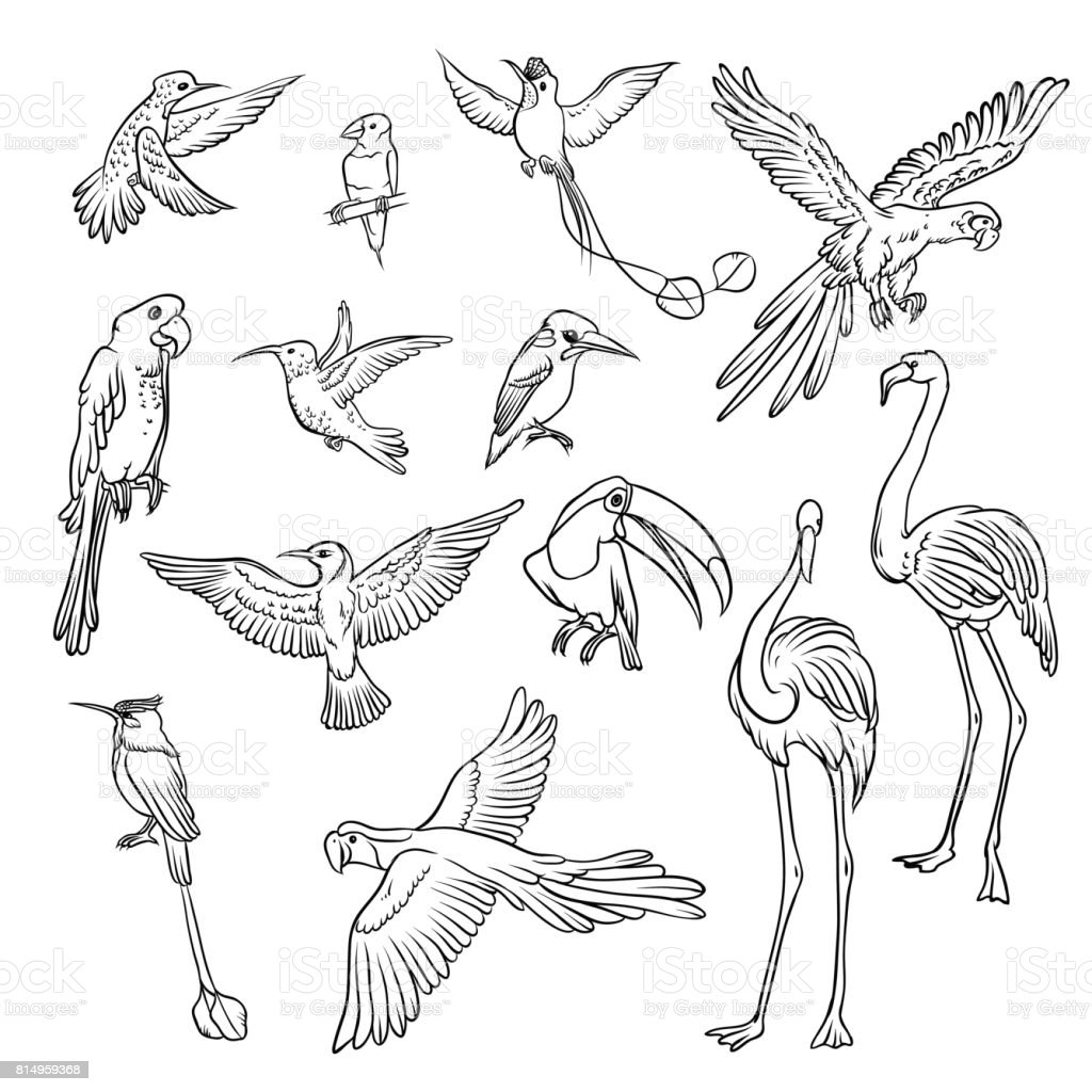 Set of sketches of flying swallows stock vector illustration - Vector Black And White Sketch Set Drawn By Hand Collection Of Exotic Tropical Birds