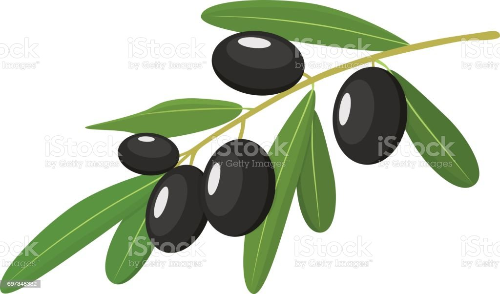 Vector black Olives Branch with Leaves Isolated on White Background vector art illustration