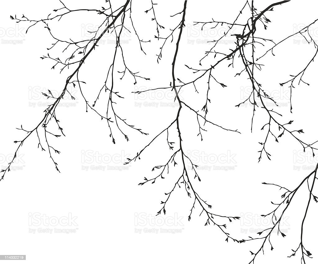 vector branches on white background vector art illustration