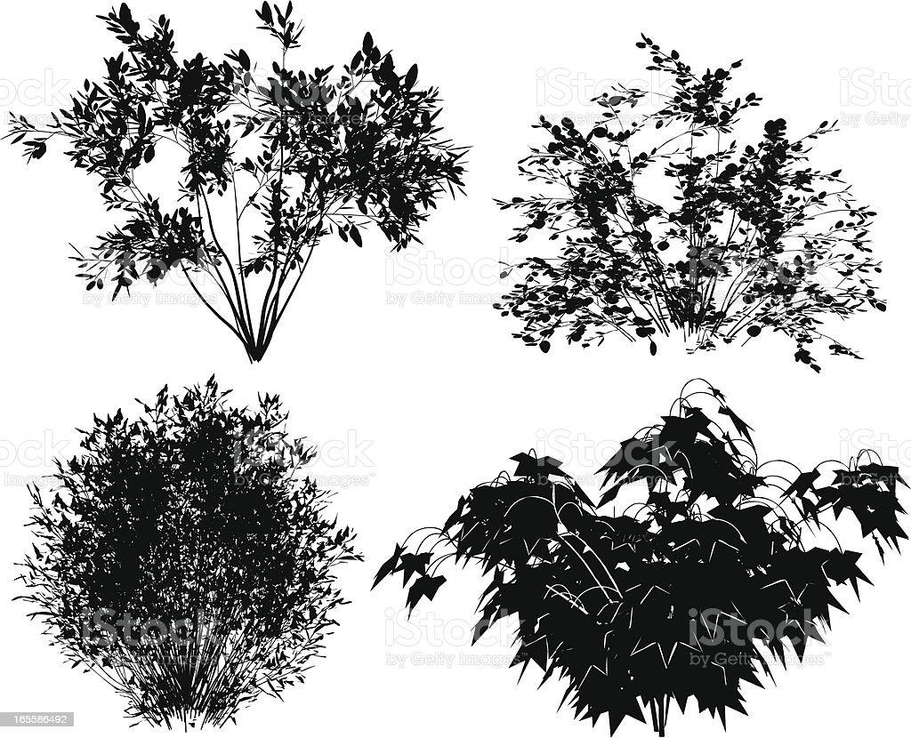 Vector bushes. vector art illustration