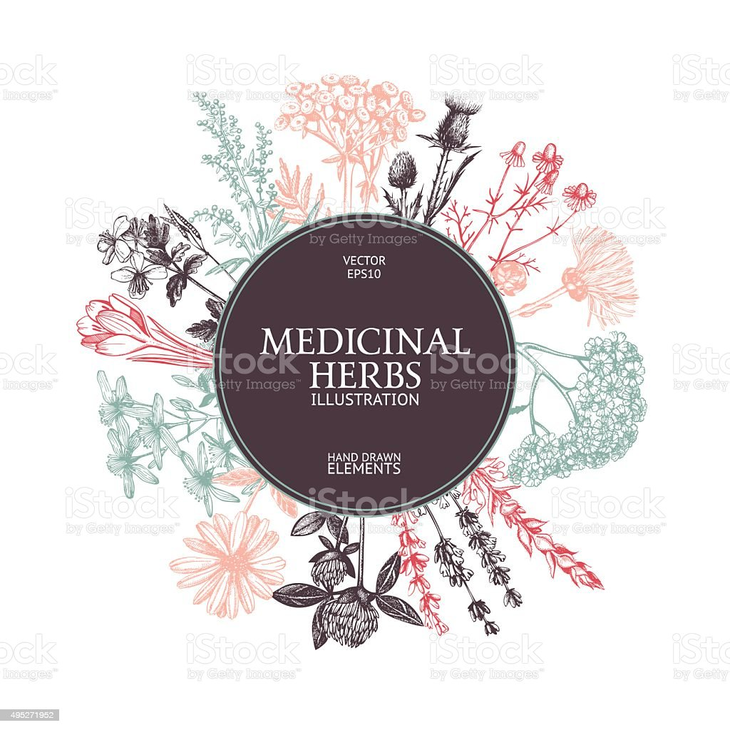 Vector card design with hand drawn herbs. vector art illustration